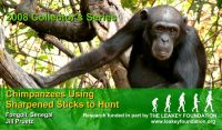 Leakey Foundation magnet with chimpanzee