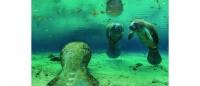 Sea life photos